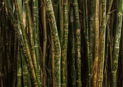 bamboo_sticks_china
